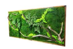 Artisan Moss' plant paintings effortlessly bring the beauty of green walls indoors