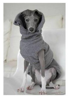 Iggy in one cosy winter coat!