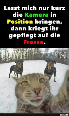 Aim the camera – – funny cats Tierischer Humor, Man Humor, Animals And Pets, Funny Animals, Cute Animals, Cute Cats, Funny Cats, Facebook Humor, Humor Grafico