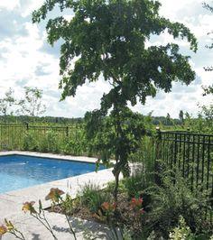 La belle georgienne | Les idées de mon jardin © TVA Publications | Création Natureden  #deco #exterieur #piscine #terrasse