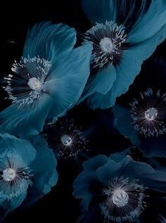 All photos copyright to their respective owners. Flower Wallpaper, Wallpaper Backgrounds, Photographie Portrait Inspiration, Blue Aesthetic, Botany, Shades Of Blue, Blue Flowers, Cute Wallpapers, Color Inspiration