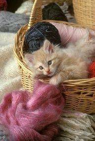 Il fascino della lana... #Kitten In The #Yarn #gattino #gatti