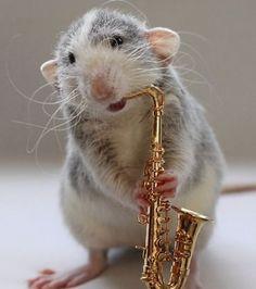 Un autre rat en train de jouer du saxophone
