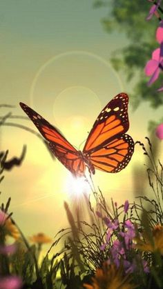 Download free Sunflower And Butterfly Mobile Wallpaper
