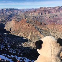 Mr. Pug takes in the Grand Canyon from his spot at the Desert View Watchtower. ——————————————  #travel #mrpug #arizona #grandcanyon #usa #roadtrip #pugs #canyon #scenic