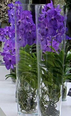 Vanda Orchid Grower - - Yahoo Image Search Results