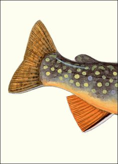 Brook Trout Tail - 5x7 inch Create Your Own Fish - by Matt Patterson, fishing art print, cabin decor