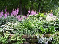 astilbe, hosta, daylily, bergenia, small ferns, and a sedum (?)