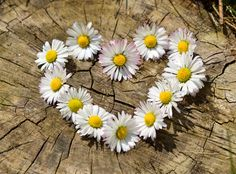love and daisy chains... #bohemianlove
