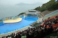 Ocean Park Hong Kong - Hong Kong Island Attractions