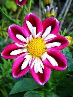 Lovely. Lovely. Lovely Flower