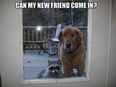 Dog wanting a friend to come and play..too cute