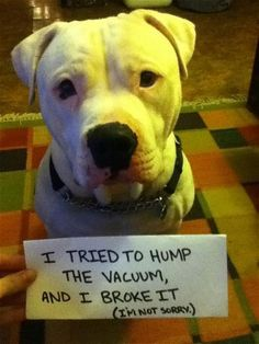 In pictures: dog shaming - Telegraph