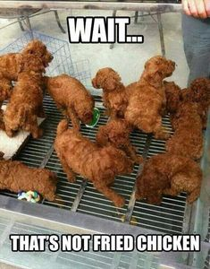 """Haha I just showed this to my teo yr old and she goes, """"oh dinner time?"""" What do you see? """"Its chicken mommy"""" haha no its puppies """"no mom its chicken. Thanks Amelia haha Haha Funny, Funny Cute, Funny Memes, Funny Stuff, Funny Things, Funny Shit, Dog Memes, Super Funny, Random Stuff"""