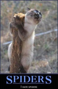 Very interesting post: TOP 99 Funny Cats Memes.сom lot of interesting things on Funny Animals, Funny Cat. I Love Cats, Crazy Cats, Cute Cats, Funny Animal Pictures, Funny Animals, Cute Animals, Animal Pics, Funny Images, Funny Pics