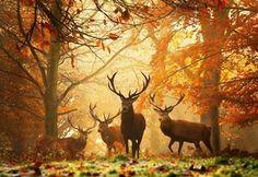 рога, животные, олени, желтые листья, осень, Лес