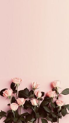 Floral wallpapers iphone android android floral iphone wallpapers 1 2 3 4 5 6 choose your favourite mariyazakir mariyazakir Tumblr Wallpaper, Rose Wallpaper Iphone, Aesthetic Iphone Wallpaper, Aesthetic Wallpapers, Iphone Wallpapers, Pink Flower Wallpaper, Nature Wallpaper, Wallpaper Ideas, Wall Wallpaper