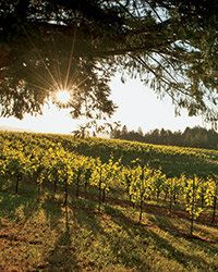 Here, the 75 best California wineries to visit for new and unforgettable experiences. Along with fun tours and food pairings, they're pouring unique tastes.