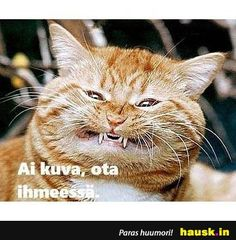 Funny Memes, Cats, Animals, Gatos, Animales, Animaux, Animal, Cat, Animais