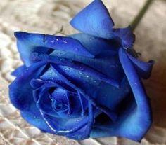 Ranking de Las flores mas bonitas del mundo - Listas en 20minutos.es