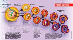 Image - Comment une cellule devient cancéreuse