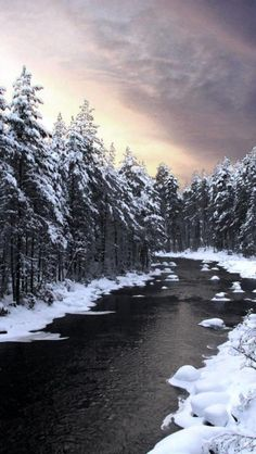 Forest, Nature, River, Lake, Snow, Finland | HD iPhone Wallpapers