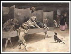 ENGLISH BULLDOG AND TOY TERRIER DOGS AT A SHOW VINTAGE STYLE DOG PRINT POSTER