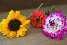 showpiece_queens county farm flowers_gardenista