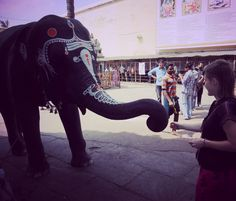 """In the backyard of Kamakshi Amman Temple taking blessing from an elephant. """"blessed are those who hunger to know history and culture"""" of different lands  #kanchipuram #tamilnadu #incredibleindia  #culturalfervour #tphotooftheday #travelforexperiences #travelblogger  #attp #Travellers #wanderlust of #southindia  #worldheritage #indiatrip #incredibleindiaoffical #globetrotters 2 #indiatourism #culturaltourism #exploration #igtravelers #oldcitywalks  #indiatravelgram & #travelgramindia 4…"""