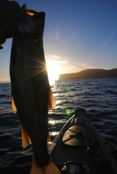 Great looking Trout caught from my kayak on Lake Taupo, New Zealand