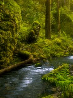 Nature gif by dstorms | Photobucket