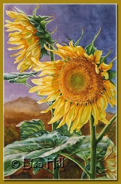 Step 6 of tall sunflowers watercolor painting demonstration by artist Lisa Hill Sunflower Art, Watercolor Sunflower, Floral Watercolor, Watercolor Flowers Tutorial, Watercolour Tutorials, Watercolor Cards, Watercolor Paintings, Watercolours, Sunflowers And Daisies