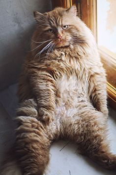 """""""PLEASE tell me its Friday."""" Photo via Cat n Day"""
