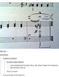 Beware of the high c's Whale shark musician humor