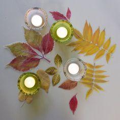Blätter Laub Herbstlaub haltbar machen laminieren Anleitung DIY