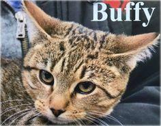 Meet Buffy TOHCS@LittleShelter.com (631) 651-9788