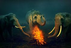 3 elephants <3