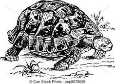 Las 24 Mejores Imágenes De Dibujos De Tortugas De Tierra En 2015