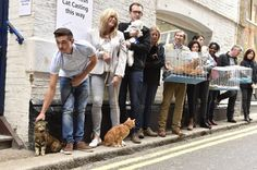 Cats & their owners queue outside Pineapple Studios before auditioning to become 'Britain's happiest cat' & the new face of £8m advertising campaign for O2 Refresh, by Matt Crossick.  #cat casting