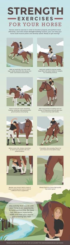 Strength exercises for your horse…definitely try them out - Equitation Horses And Dogs, Show Horses, Rare Horses, Horse Riding Tips, Horseback Riding Tips, Horse Exercises, Horse Care Tips, Horse Anatomy, Horse Facts