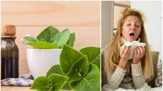 Tato léčivá rostlina perfektně nahradí kapky do nosu a posmrkané kapesníky. Jak z nich vyrobit léčivý sirup a mast na podrážděný nos? Medicine, Herbs, Homemade, Healthy, Nature, Cookies, Syrup, Health, Crack Crackers