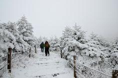 [11월 30일] 소백산 설경 - 등산 갤러리