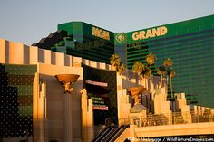 MGM Grand Hotel & Casino located on the Las Vegas strip  MGM Grand Casino & Hotel Photo