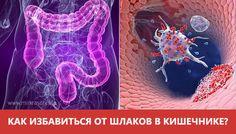 неумывакин лечение от паразитов