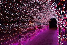 flower petal tunnel mehndi enterance  wedding decor ideas india indian inpiration
