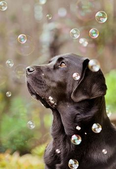 If your dog loves bubbles, it's a great opportunity for when you're having it photographed!