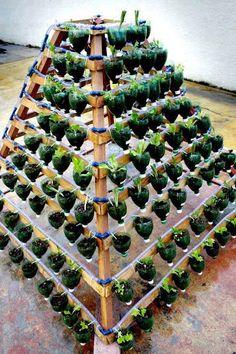 Aus Holzlatten oder Paletten gefertigte Pflanzpyramide, mit PET Flaschen oder Joghurtbechern als Behältnissen