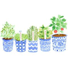 Why not grow a summer garden?  via Caitlin McGauley pinned with Bazaart