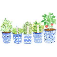 Why not grow a summer garden?  via Caitlin McGauley pinned with Bazaart