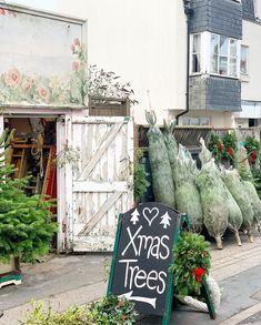 Christmas Tree Farm, Xmas Tree, Ladder Decor, Country, Home Decor, Christmas Tree, Rural Area, Holiday Tree, Country Music